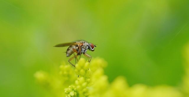 servizi disinfestazione nidi di vespe